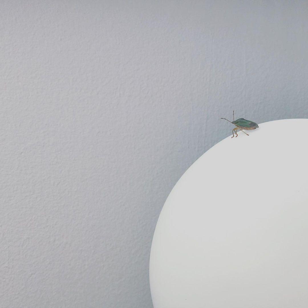 Kleine Wanze auf einer Lampe