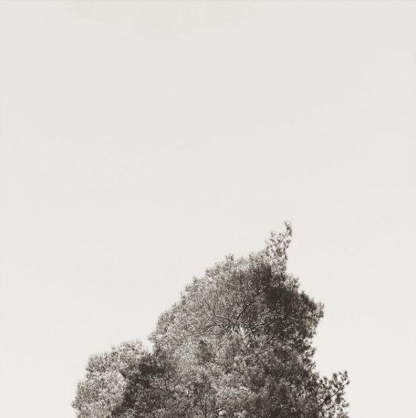 Wipfel in Schwarz-Weiß