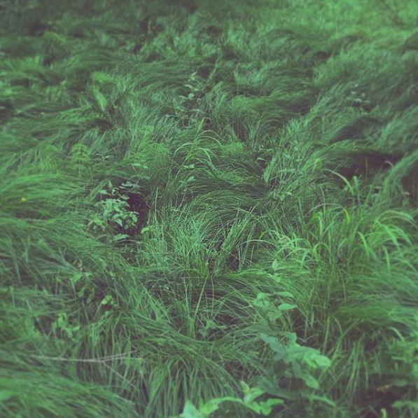Frisches Gras im Wald